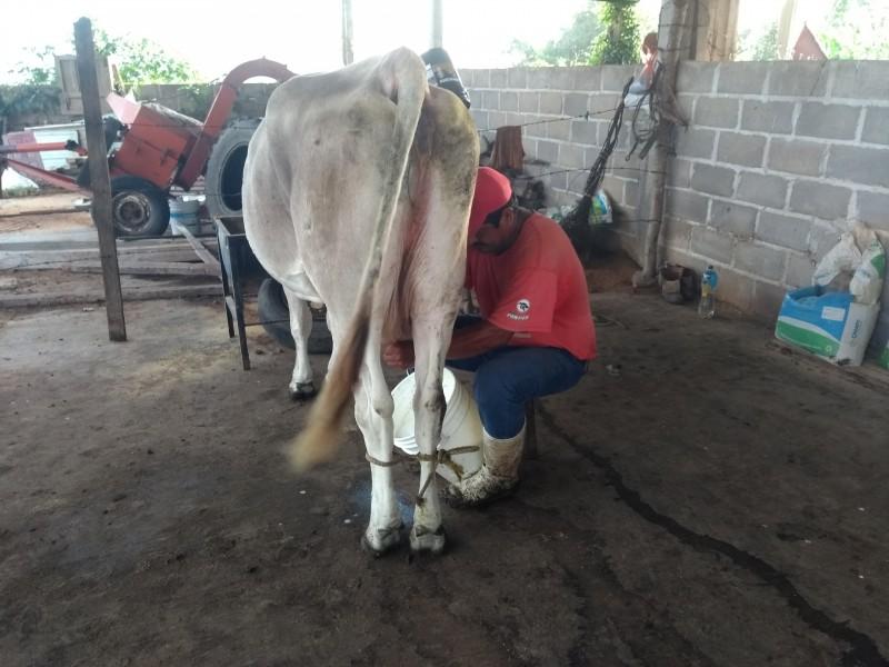 Empresas pagan costos bajos a productores de leche