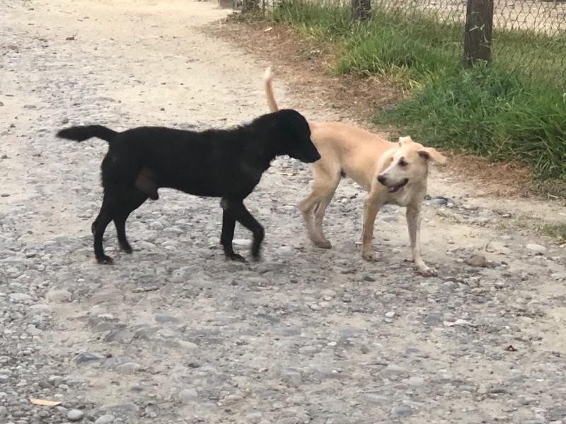 En aumento perros maltratados en Tuxpan