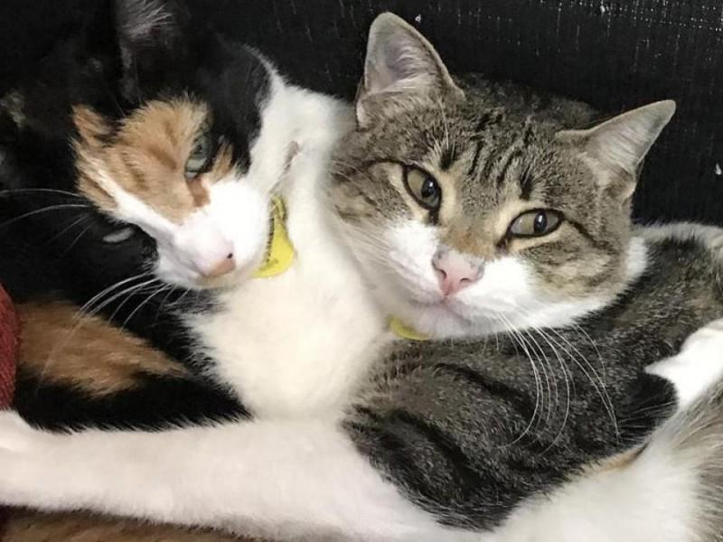 En China sacrifican tres gatos por dar positivo a Covid-19