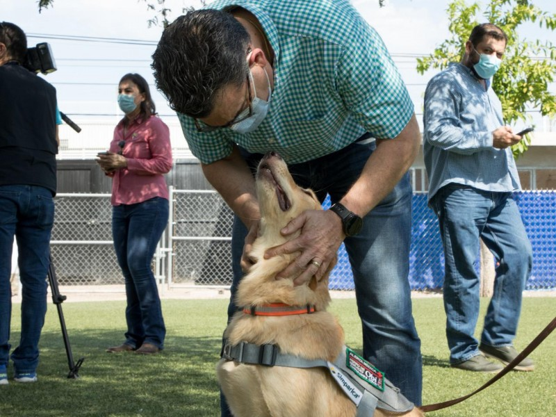 En dos semanas caninos detectaran COVID-19 en Sonora