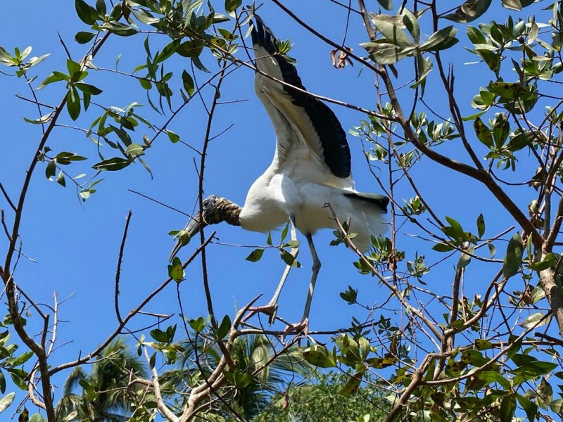 En puerta avistamiento de aves en Barra de Potosí