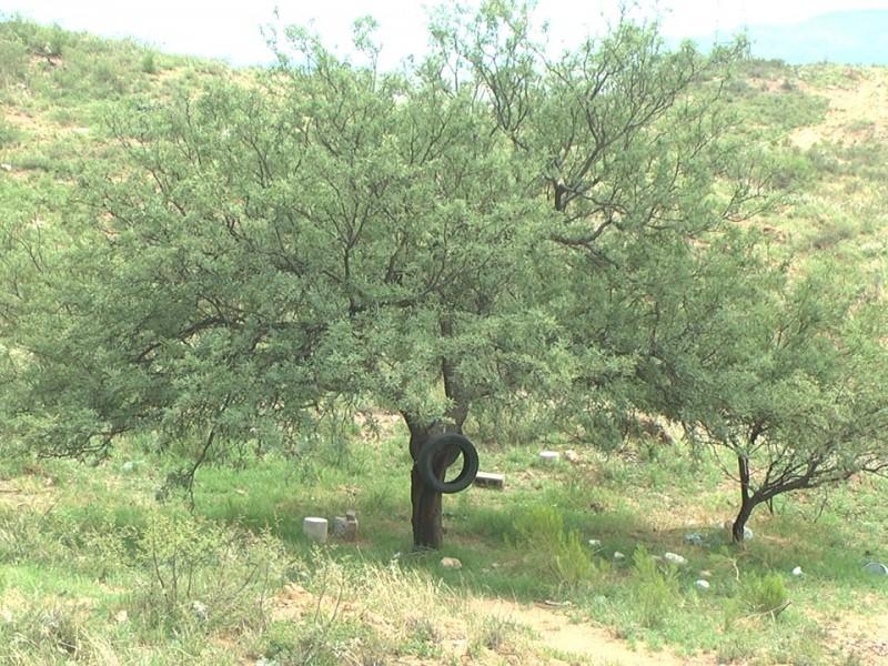 En riesgo 6 mil árboles por no aprobar reglamento