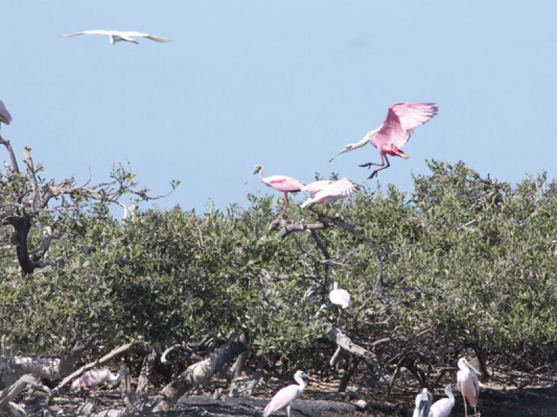 En riesgo conservación de los ecosistemas