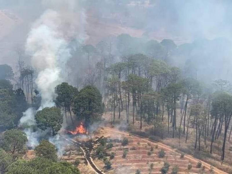 En riesgo superficie forestal de la región Lerma - Chapala