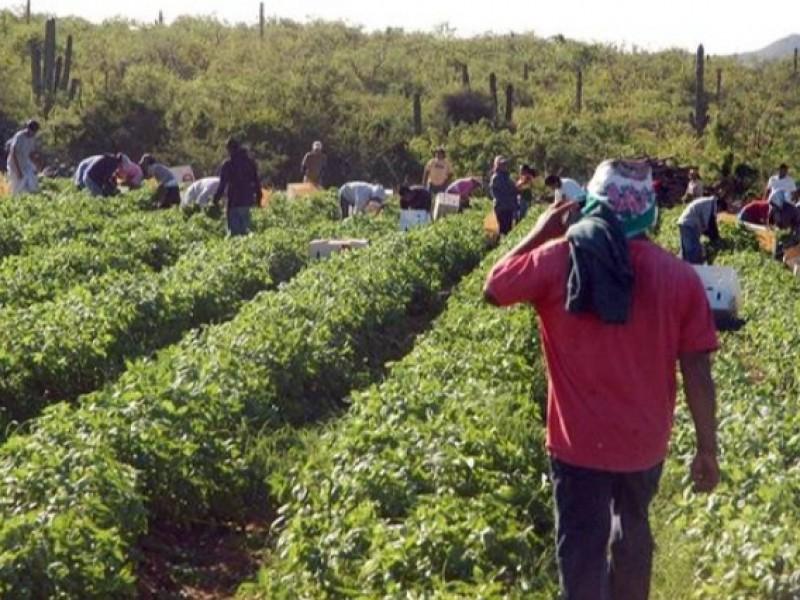 En un 50% resultan afectados productores locales