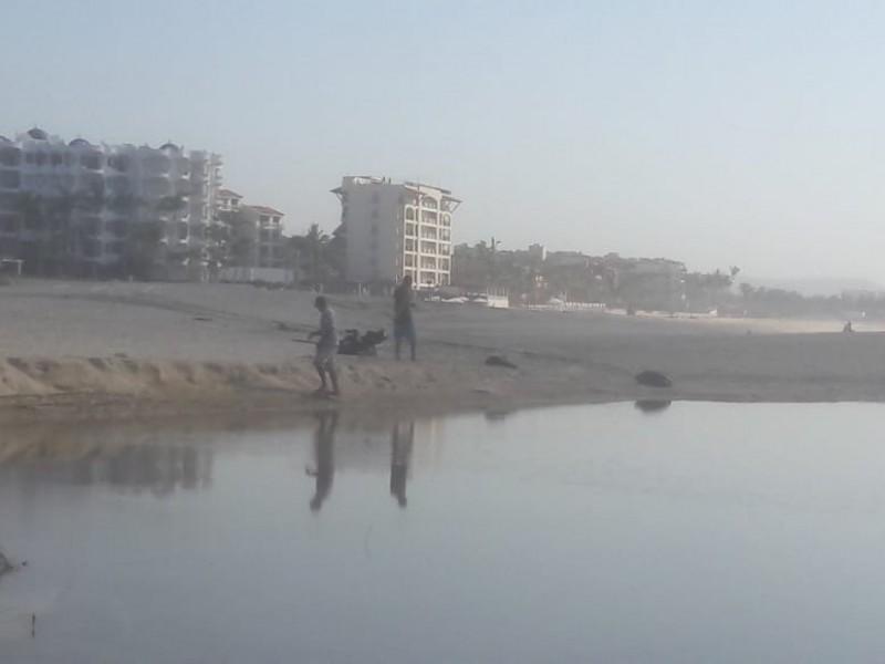 En una semana más, concluirán labores de limpieza en playas