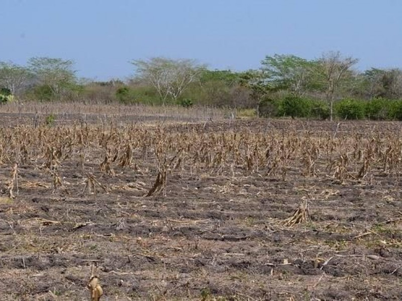 En Veracruz 84 municipios tienen algún grado de sequía
