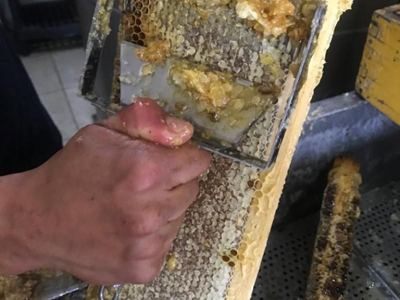 Apicultura reporta buena cosecha pero bajas ventas en Zacatecas