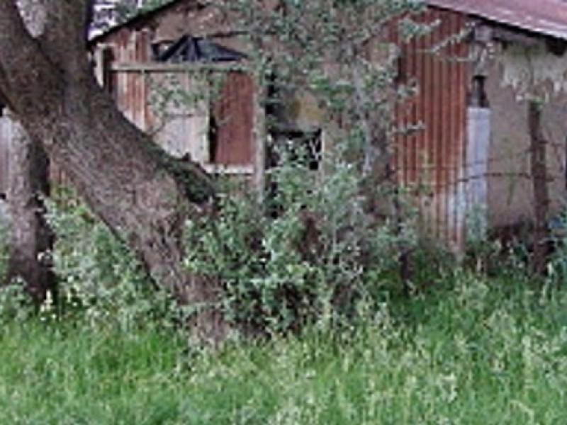 Encuentran campamento del crimen organizado con restos humanos