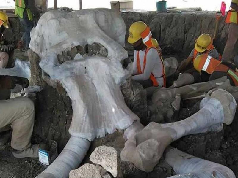 Encuentran restos de 60 mamuts en aeropuerto de Santa Lucía