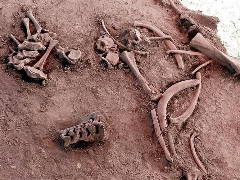 Encuentran restos de Mamut en Santa Lucia