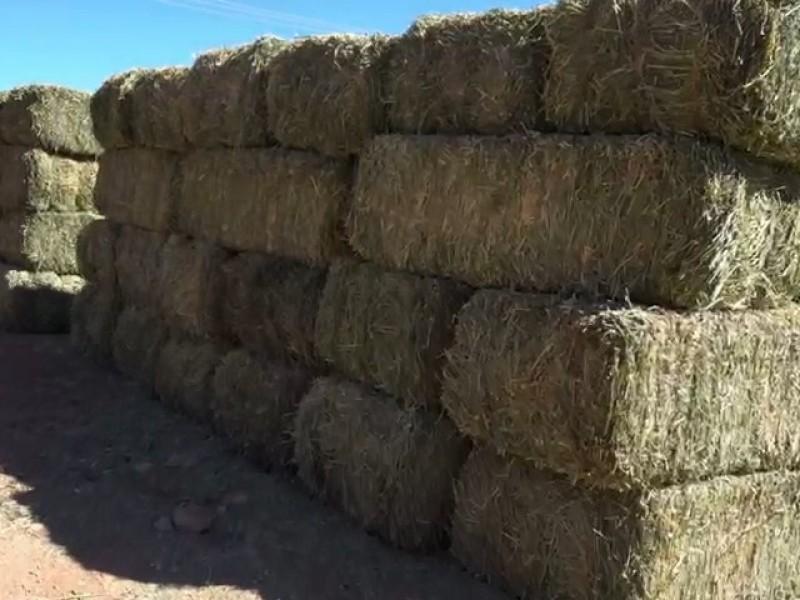 Entrega de apoyos a 300 ganaderos