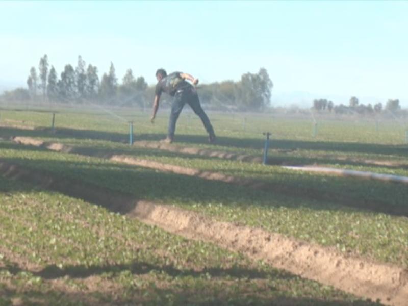 Entregarán préstamo a agricultores para agua