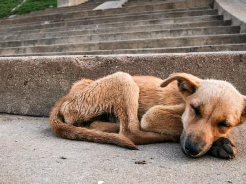 Envenenan a 25 perros, hay denuncia ante MP