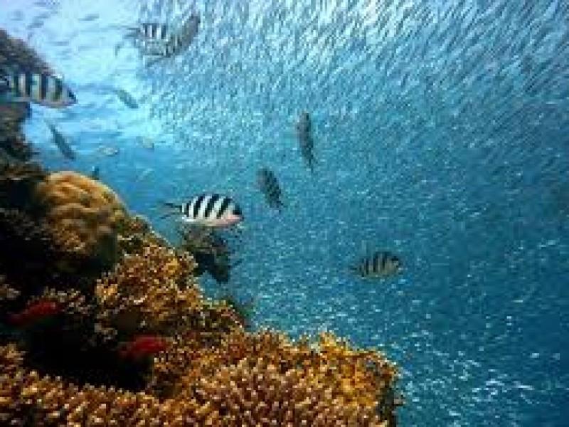 Es el día mundial de los océanos