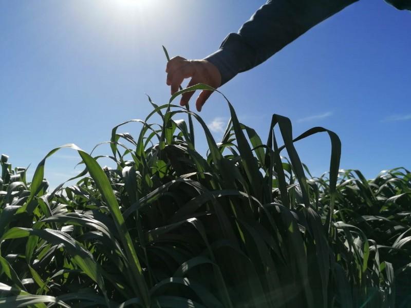 Escasez de agua afectará producción de alimentos