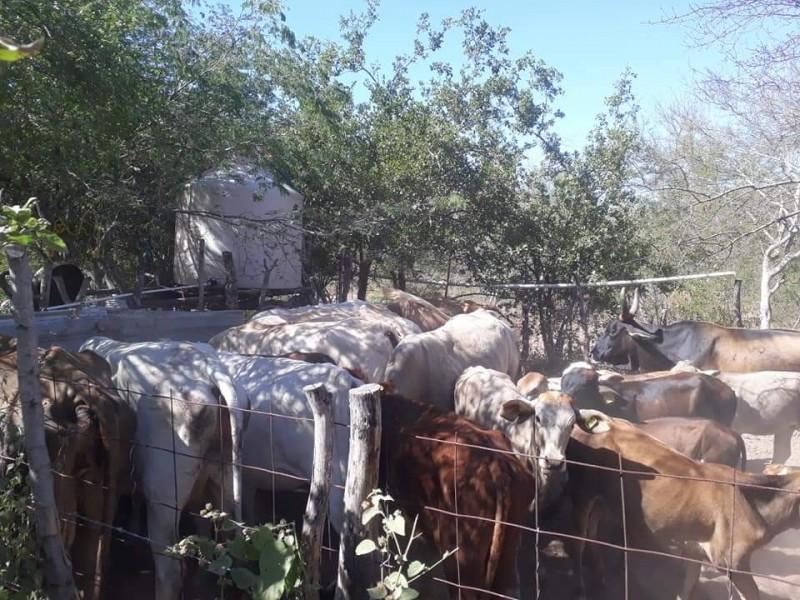 Escasez de agua y alimento afecta a ganaderos