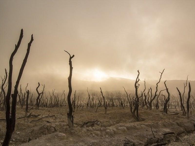 Especiales Meganoticias ǀ ECOCIDIO, pérdida de bosques