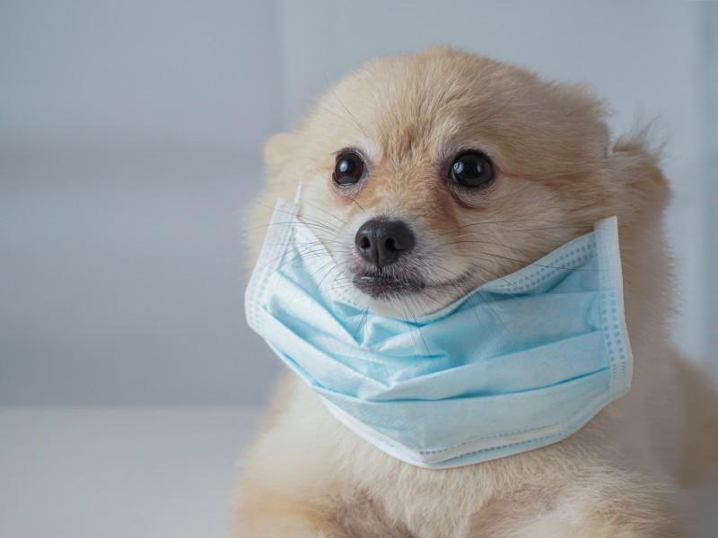 Especialistas aseguran que mascotas no transmiten coronavirus.