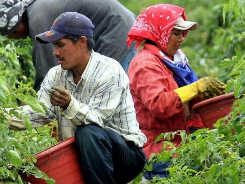 Esperan la llegada de 300 mil jornaleros migrantes a Sinaloa