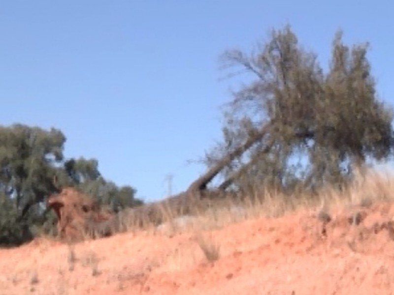 Esperan que autoridades se involucren en equilibrio ecológico