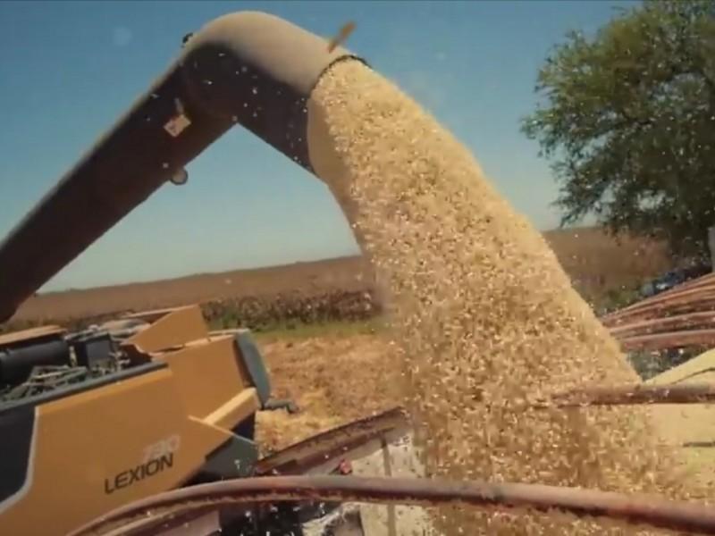 Esta semana la cotización del maíz perdió 6.1 dólares