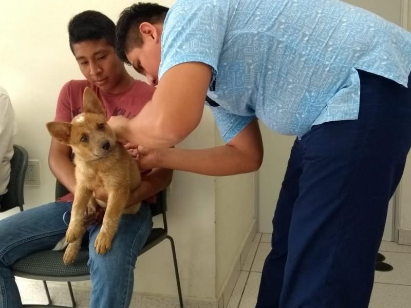 Establecen metas para disminuir perros callejeros