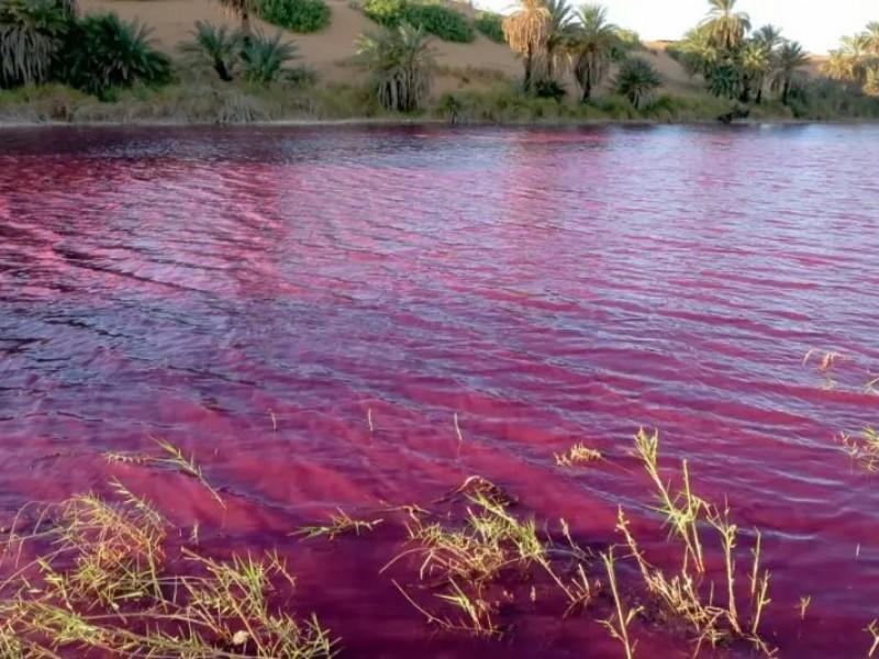 Estanque se tiñe de rojo cerca del mar Muerto