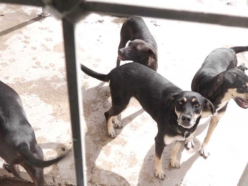 Esterilizar y adoptar, el camino para acabar con sobrepoblación canina