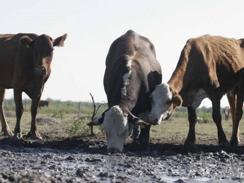 Estiaje, un problema severo para ganaderos de Veracruz