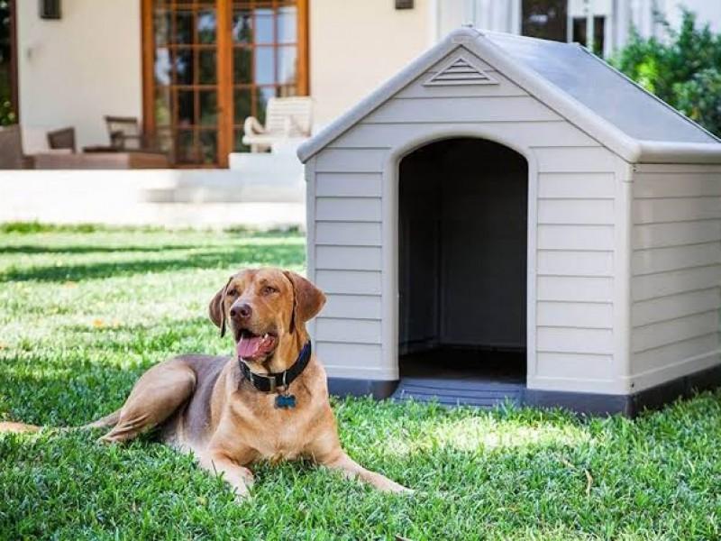 Estos son algunos cuidados para evitar que mascotas sufran insolación