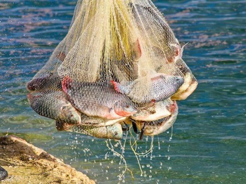 EU extenderá embargo pesquero a México