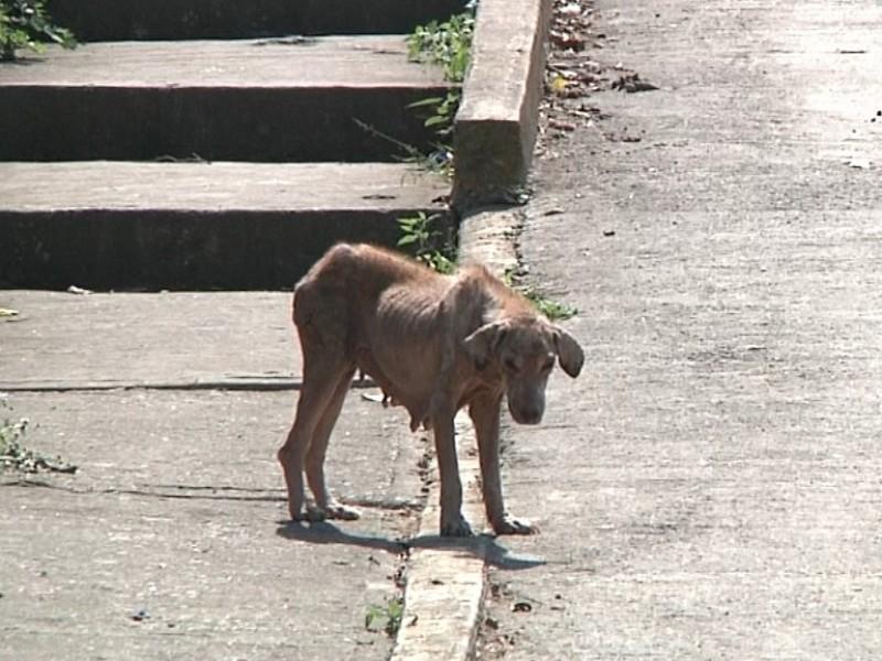 Exhortan cuidar mascotas para evitar contagio de sarna