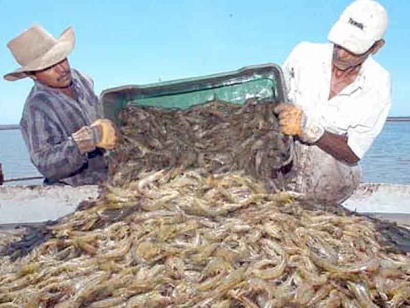 Exigen precio garantía para camarón acuícola