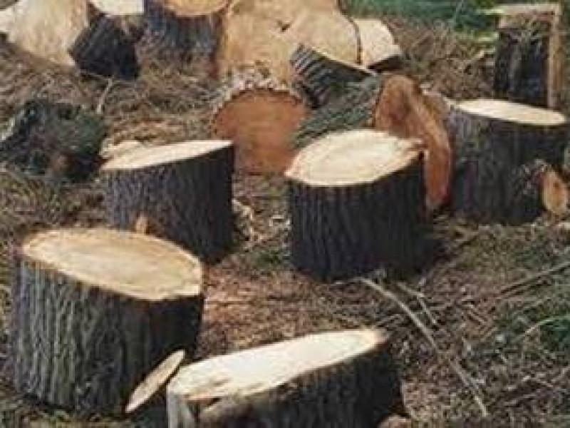 Explotación de recursos maderables en Chiapas sin castigo