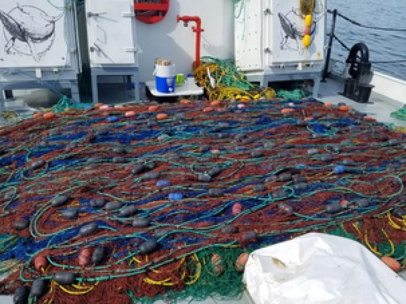 Extraen redes totoaberas en el Golfo de California