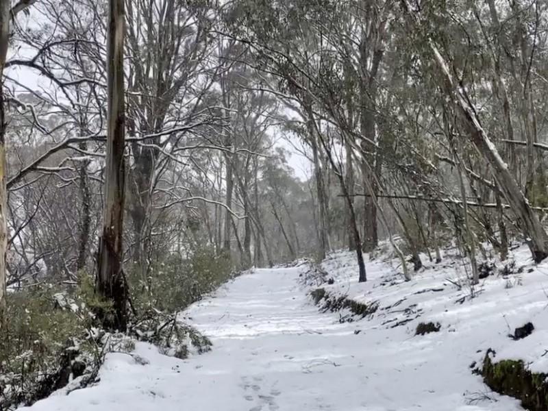 Extraña nevada cubre al sureste de Australia