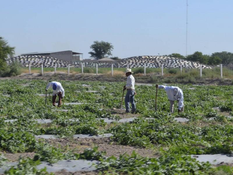 Falta apoyo federal a los productores agrícolas laguneros