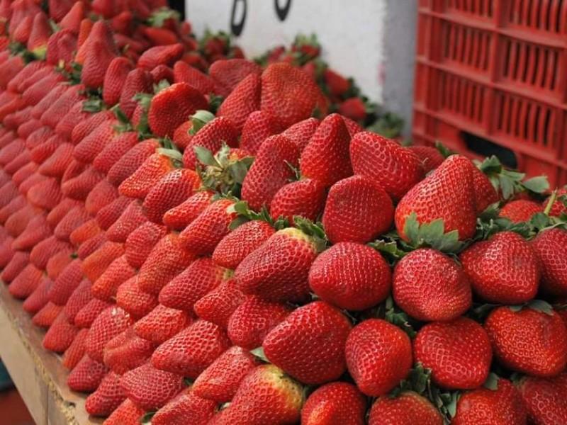Falta de organización de productores agrícolas, dificulta exportación de berries