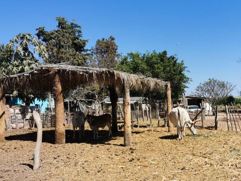 Falta de agua golpea a ganaderos de El Fuete