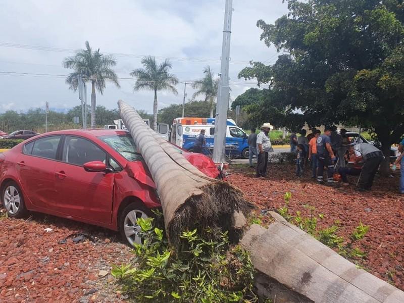 Familia se impacta contra una palma, en Cuauhtémoc