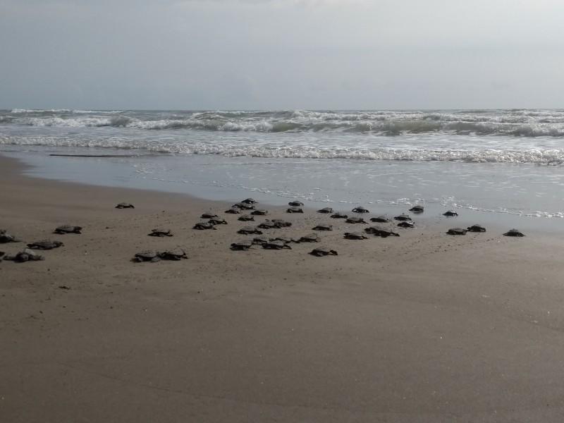 Familia Velázquez Leyton,un ejemplo de cuidar tortugas marinas