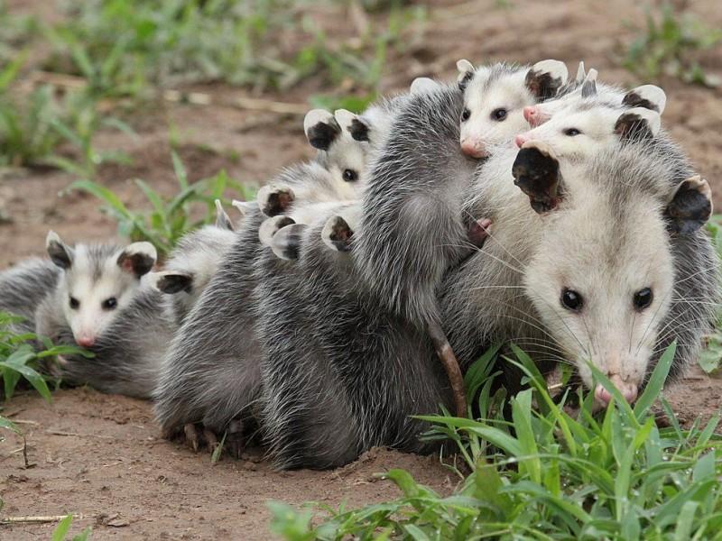 Fauna trata de adaptarse a la invasión de áreas naturales