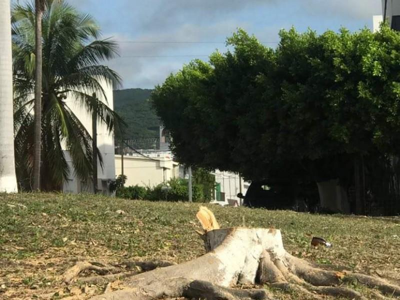 FGE investiga tala de árboles en Tuxtla