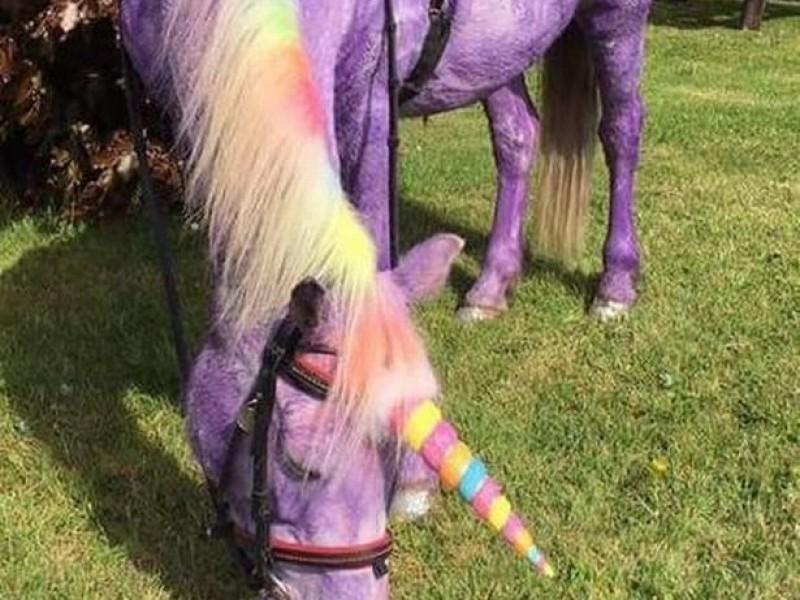 Fiestas infantiles con ponis de pizarrón causan enojo