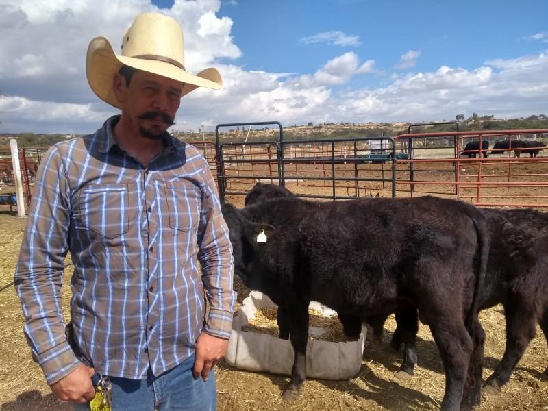 Fin de año incierto para los ganaderos en Guanajuato