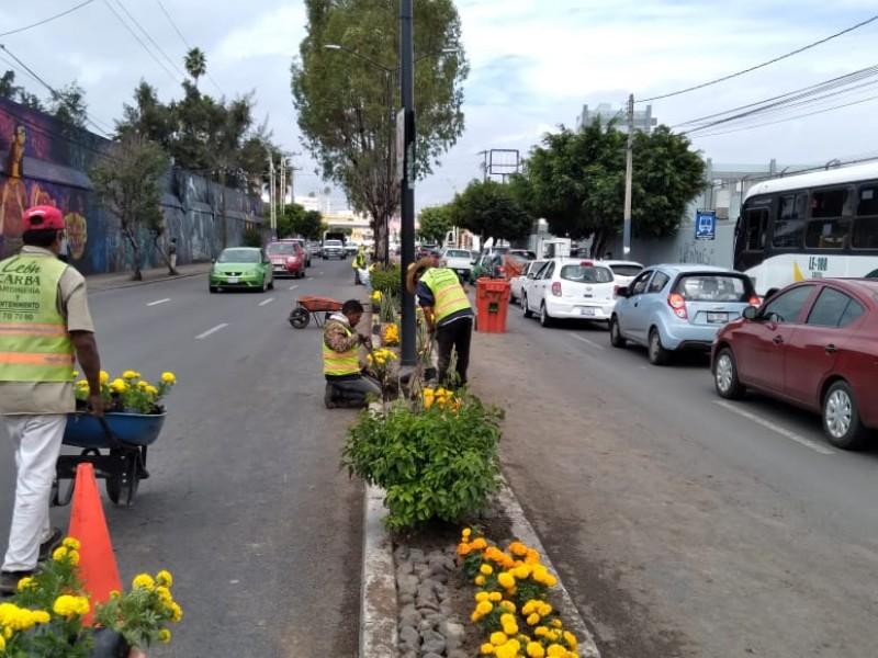 Flores de cempasúchil adornan avenidas en León