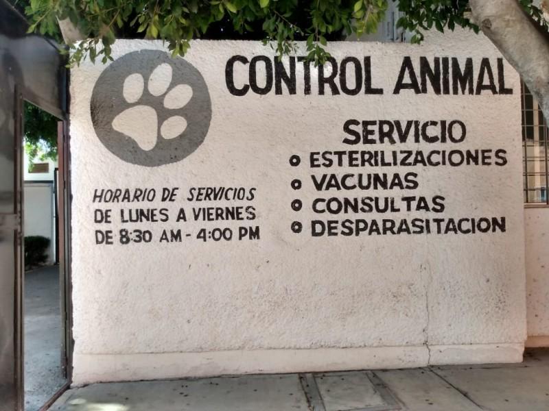 Fomenta UCAM adopción y esterilización de mascotas