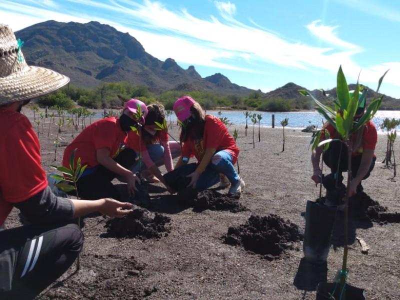 Fomentan deporte para reforestación de mangle en Estero del Soldado