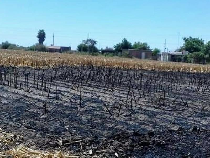 Forman comité ecológico para prevenir quema de soca
